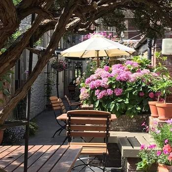 Courtyard - under rosemary tree
